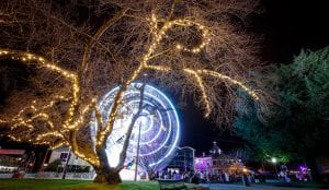 Bright ferris wheel at night with fairy lights on a tree in Bathurst