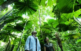 Two people standing in a Cairns Rainforest