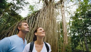 Couple exploring the Atherton Tablelands Cathedral Fig Tree