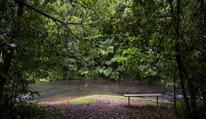 Bench near a lake surrounded by trees in Atherton
